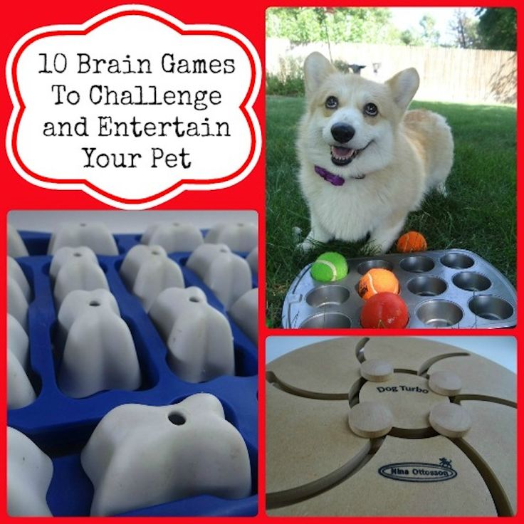 10 Brain Games to Challenge and Entertain Your Pet   Babble
