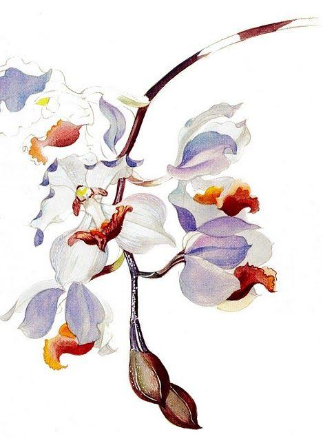 Margareth Mee - watercolor