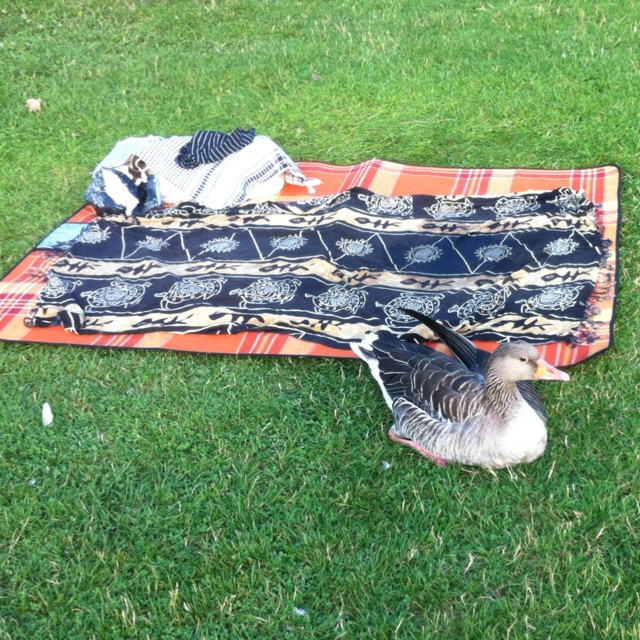 Modern ducks of Prague bring they own blankets at the beach now:). Zlute lazne, Prague