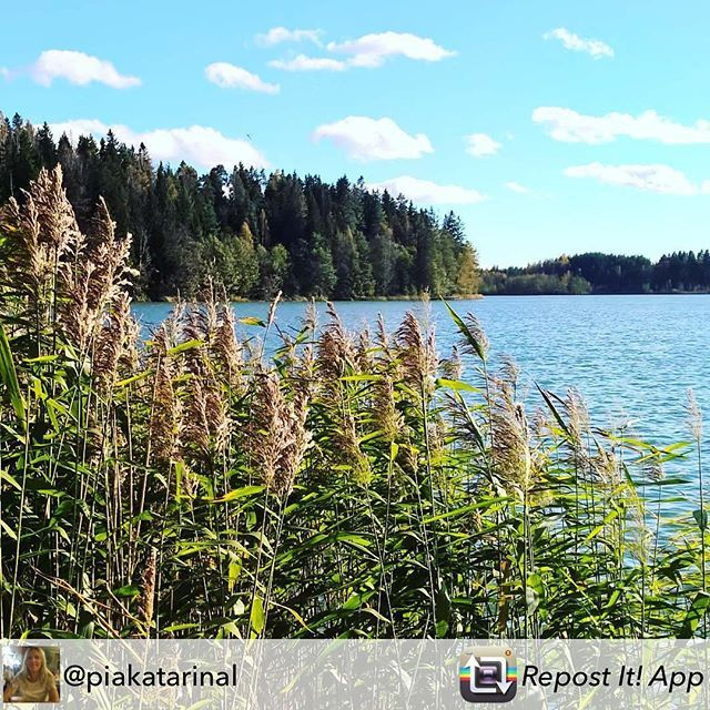 Savijärvi on Nikkilän lähin järvi.  Det närmaste träsket ligger i Savijärvi.  Kiitos kuvasta kuuluu käyttäjälle @piakatarinal  #lokakuu alkoi aurinkoisena☀ #oktober startade soligt☀ #finnishnature #suomenluonto #natur #luonto #nature #järvi #träsk #lake #savijärvi #sipoo #sibbo #muistojennikkilä #pilvet #molnar #clouds #bluesky #kaislikko #sunnyday #weekend