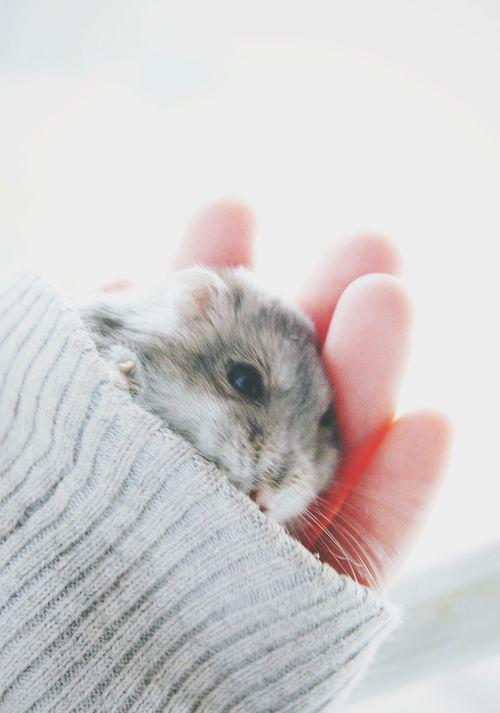Zelf thuis hebben we een hamster