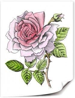 Pétales de rose  Les pétales séchés et broyés de la rose, mêlés à quelques gouttes d'huile ou d'hydrolat de rose, ravivent les teints moroses, réveillent les peaux matures, estompent les signes de la fatigue et de la tristesse.