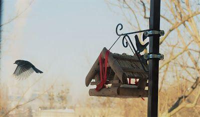 Wybredne sikorki - czyli karmienie ptaków w mieście...