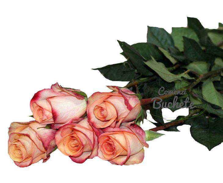 Trandafiri Fidji/Fidji Roses, trandafiri de Ecuador, o nuanta deosebita, de o eleganta aparte.