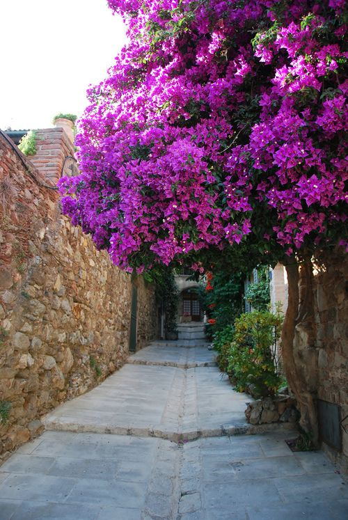 Grimaud, Provence, France...: