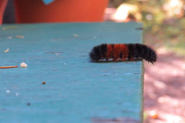 One small step for man, one big step for a caterpillar || MJUPhotography