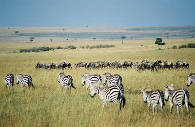 The best time to visit Kenya is in the month of January and February when the weather is generally hot and dry and most awaited the pleasant one.  Tours in Kenya allows you to explore this wild and beautiful land in any way you desire. We have popular game lodges, boutique ranches and balloons tours to camel-back safaris. So whenever you visit Kenya for your tours and travelling, come to us for sure !
