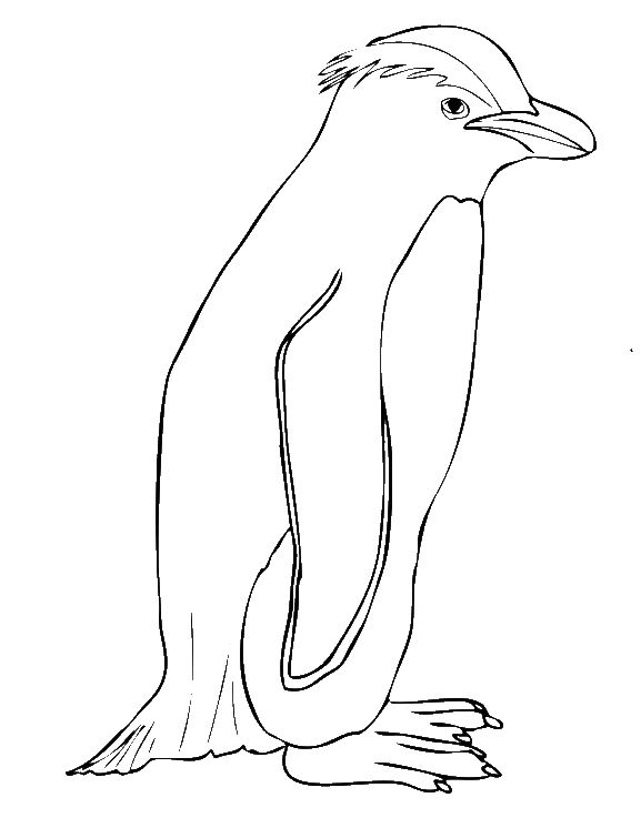 endangered animal coloring pages free - photo#28