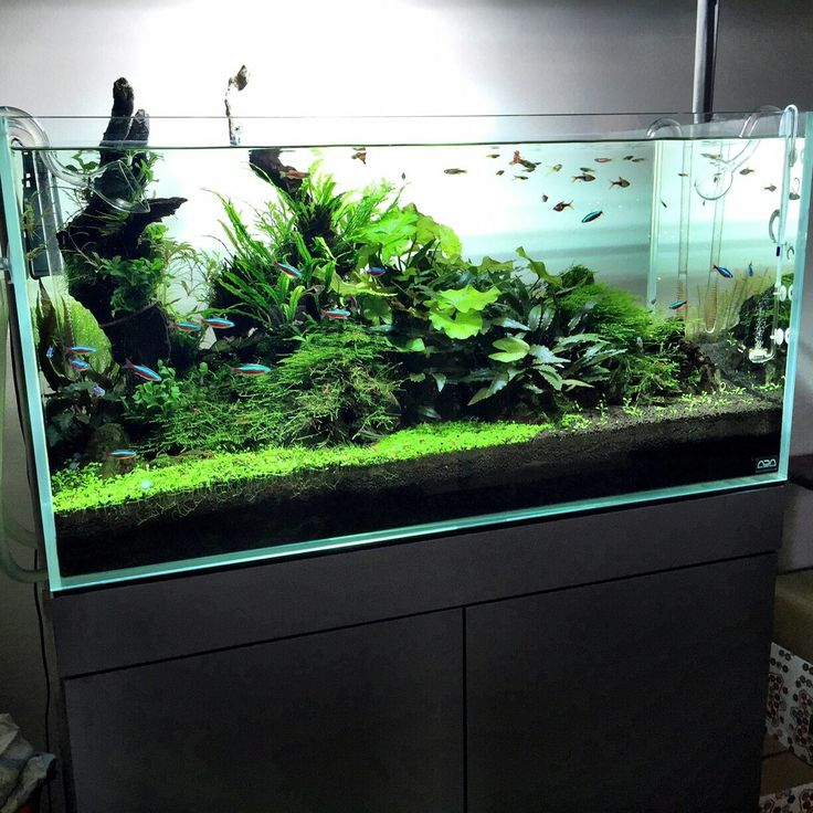 720 Best Images About Aquascaping On Pinterest
