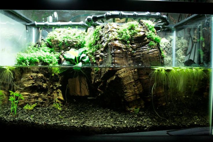 With an inspired arrangement of d cor and water features for Fish tank turtles