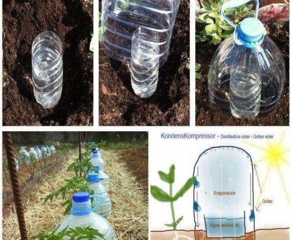 Испанский садовник Хортелано Хортамент предложил очень простую и практичную систему капельного полива растений, которую может сделать каждый из обычных пластиковых бутылок. Такой полив поможет уменьш…