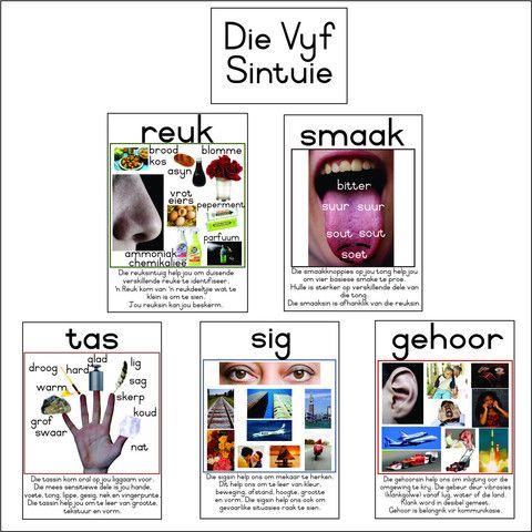 Picture of Die Vyf Sintuie