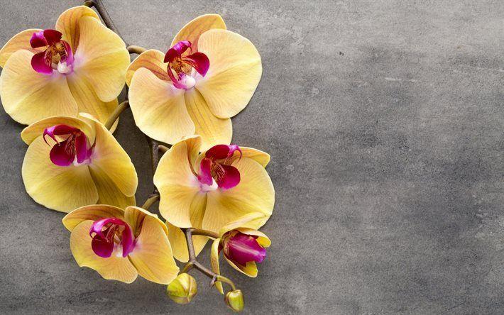 Scarica sfondi ramo di orchidee, giallo, orchidee, fiori tropicali
