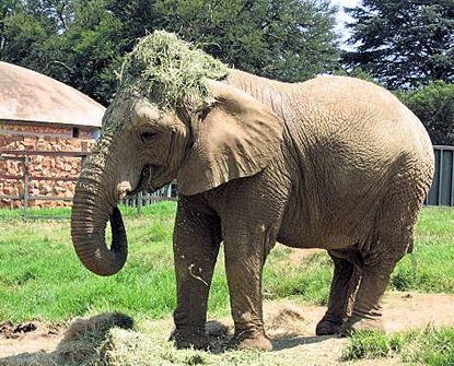 Suitable for children of all ages, the Johannesburg Zoo gives kids the chance to admire 320 over species of animals. The Zoo houses everything from the Big 5 to record holding animals like the Fennec Fox – the smallest canid; and the Andean Condor – the largest predatory bird.