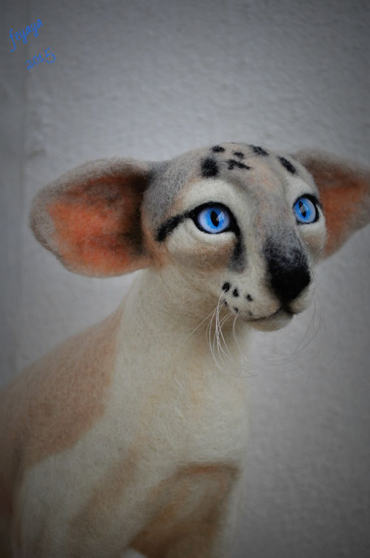The Oriental cat, 12 inches tall (31cm).