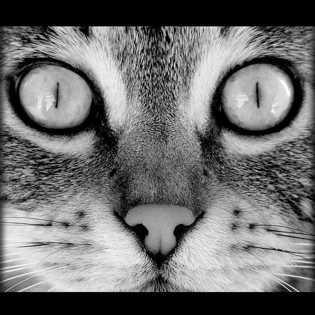 animal eye black and white - photo #7