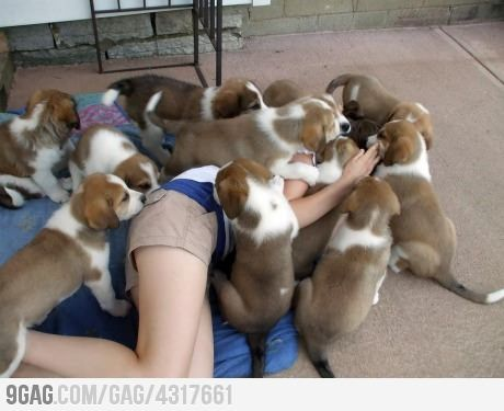 A pile of puppies attacking a helpless humanPuppies, Dogs, Pets, True, Funny Stuff, Funny Animal, Things, Smile, Instant Antidepressant
