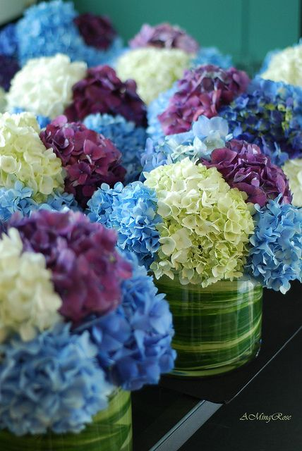 multi-color hydrangea centerpieces. Would be gorgeous in square vases!