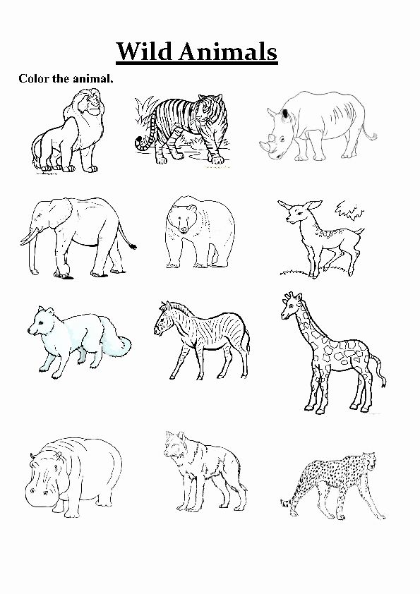 Wild Animals Coloring Pages Printable Awesome Colour The Biggest Animal  First And Go Animal Worksheets, Animals Wild, Big Animals