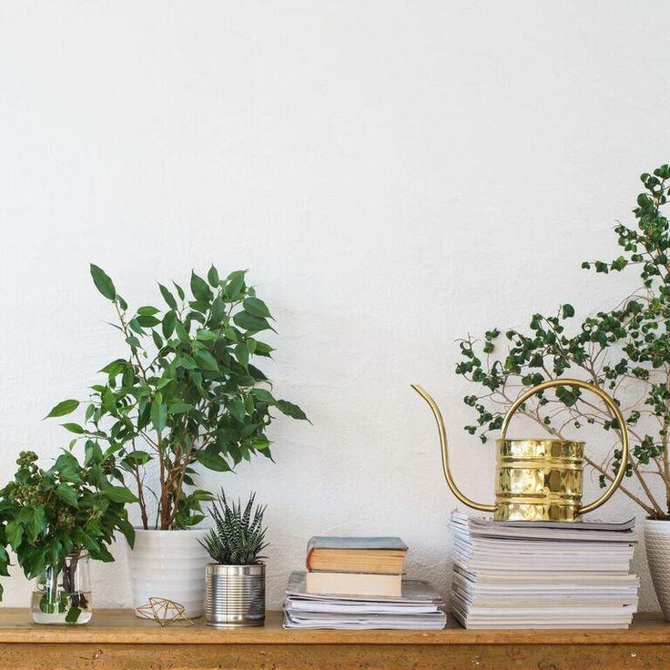Como ya te hemos platicado, las plantas de interior no solo son una opción económica y sencilla para decorar, también son poderosos fi...