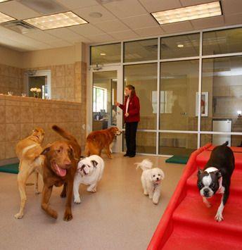 Animal Arts > Pet Resorts > The Grand Pet Resort