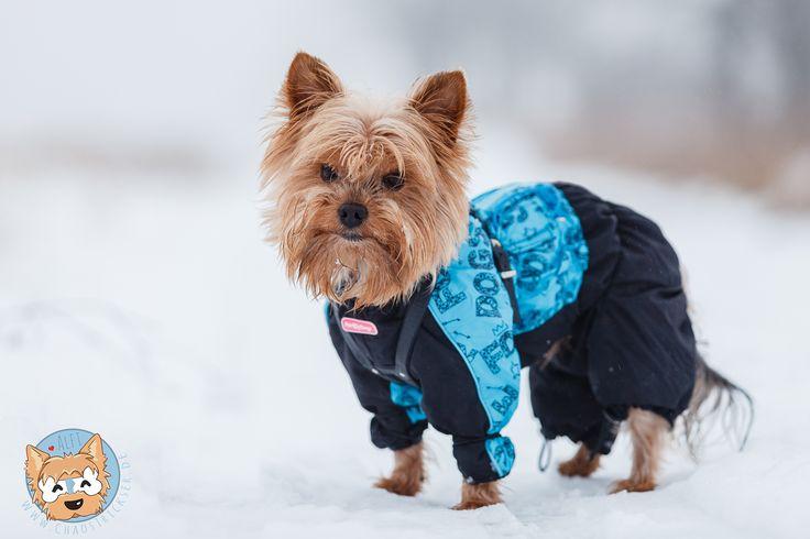 50 besten hundemode Bilder auf Pinterest | Haustiere ...