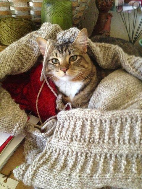 Bartholomew type cat in a blanket