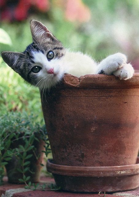 Well hello there, by any chance are you planting catnip?