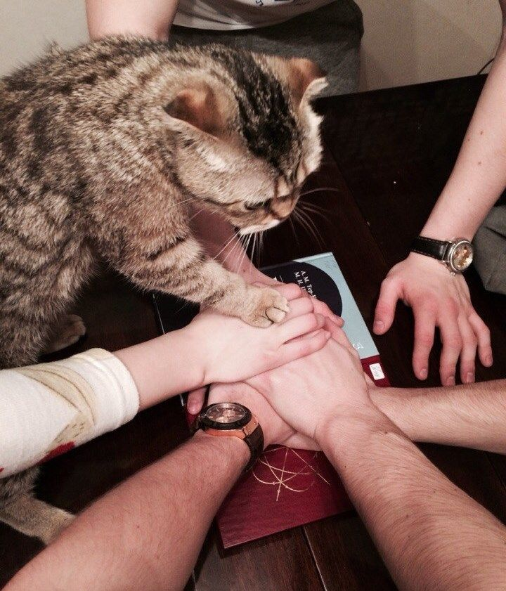 Corporation Cats しっぺに参加するお人よし