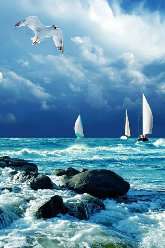 Assalamualaikum wr wb  Allah berfirman dalam surat Kerajaan (Al-Mulk) : 19  Dan apakah mereka tidak memperhatikan burung-burung yang mengembangkan dan mengatupkan sayapnya di atas mereka? Tidak ada yang menahannya (di udara) selain Yang Maha Pemurah. Sesungguhnya Dia Maha Melihat segala sesuatu.