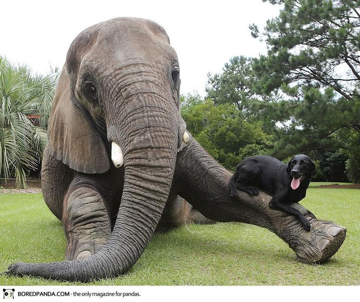 Adorable Friendship Between Elephant and Dog Who Love Playing in the Water - Source: Myrtle Beach Safari | Photographs by: Barry Bland (via)