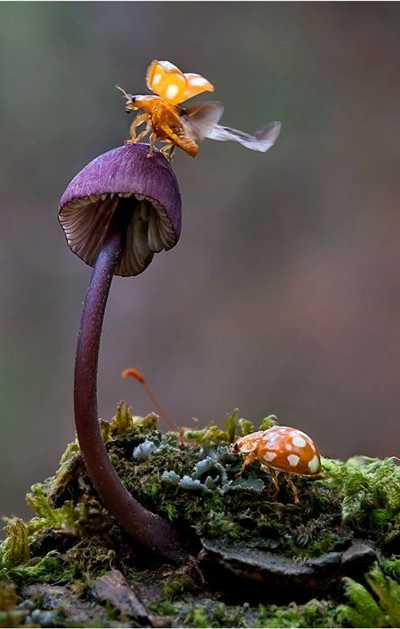 Fly Away.. (Von Moonshroom )
