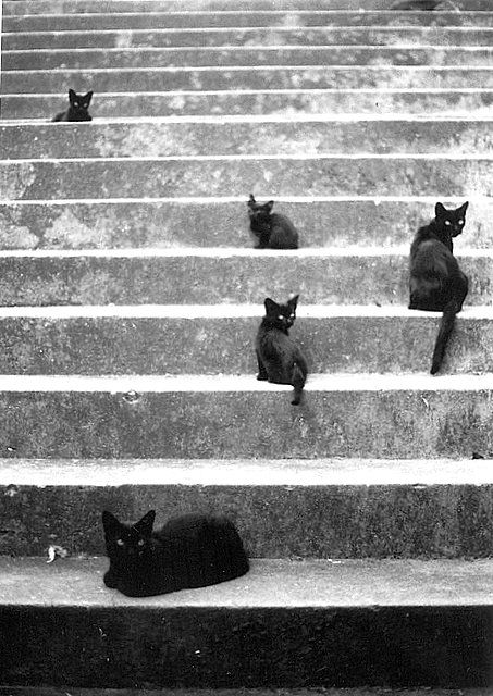 .: Kitty Cat, Animals, Stairs, Meow, Black Cats, Black Kitties, Cat Cat, Blackcats, Photography