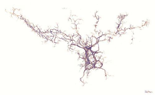 Olfactory Bulb Neuron This is a cultured... | Mirror Neuron Artwork