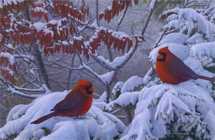1000 images about butterflies birds on pinterest - Pictures of cardinals in snow ...