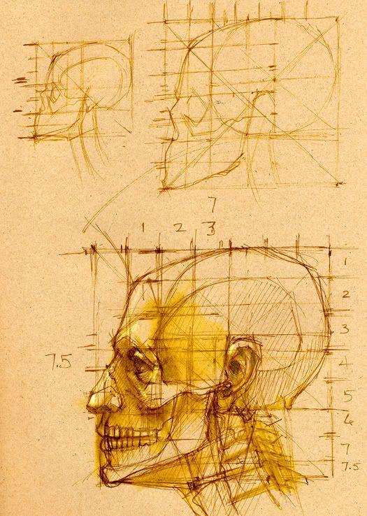 Artistic Anatomy: Photo