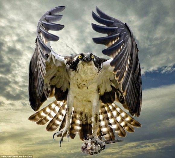 生き生き自然、パワフル刹那。野生動物写真コンテストの最終選考に残った素晴らしい写真(昆虫有り)                                                                                                                                                                                 もっと見る