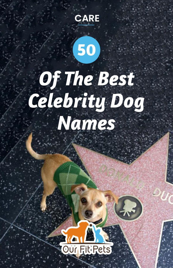 50 Of The Best Celebrity Dog Names Our Fit Pets Celebrity Dogs Dog Names Famous Dogs