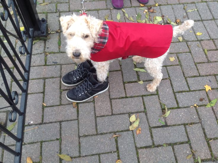 My dog is always so anxious for his walks he even gets dressed for it. He puts his coat on, then his lead on and finally to top it all he puts MY shoes on.