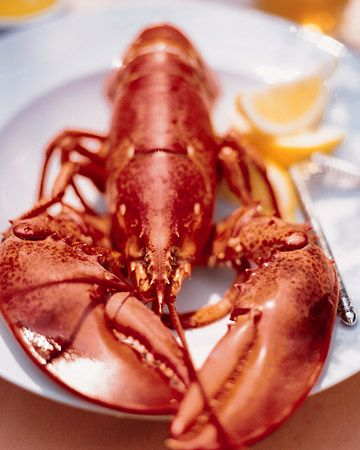 Boiled Maine Lobster - Martha Stewart Recipes -- I'm basically lazy and have the fishmonger steam them for me, but the best tip is at the bottom of this recipe:  snip the tips of the large claws and drain them before eating -- saves a giant mess!