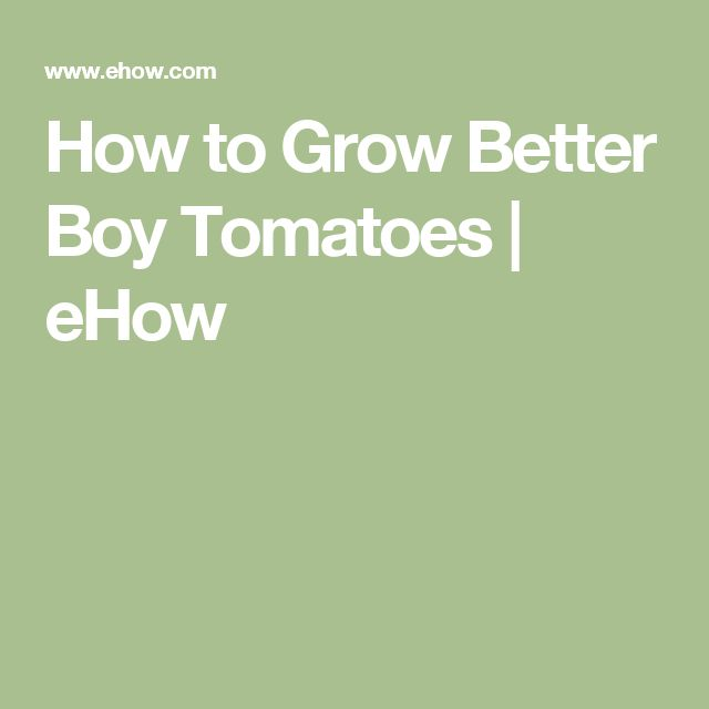 How to Grow Better Boy Tomatoes | eHow