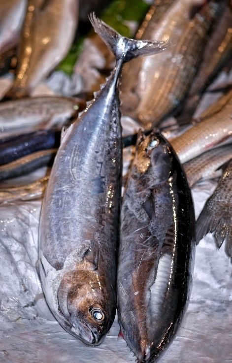 A Pair of Fresh Fish