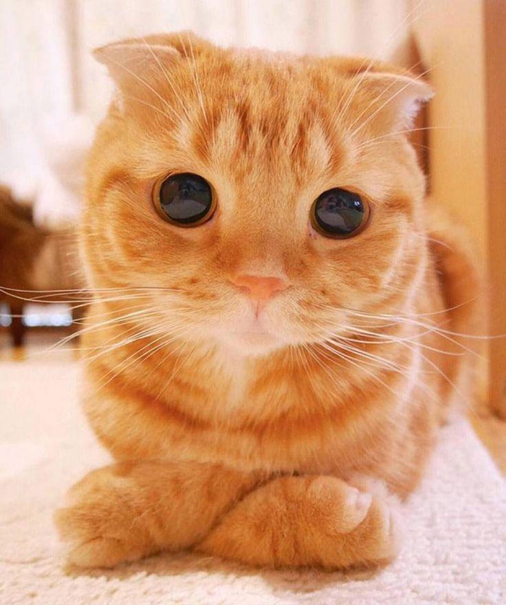 15 najładniejszych kotów świata. Nie oderwiesz od nich oczu [GALERIA]
