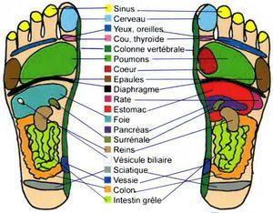 Carte des pieds schema reflexologie plantaire