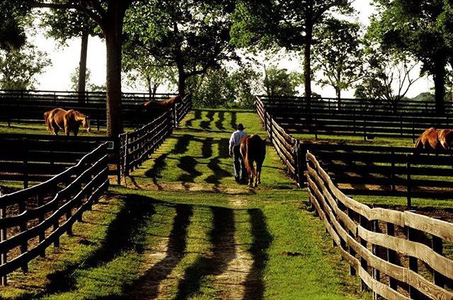 Channel Your Inner Cowboy at These Glamorous, Under-the-Radar Texas Ranches