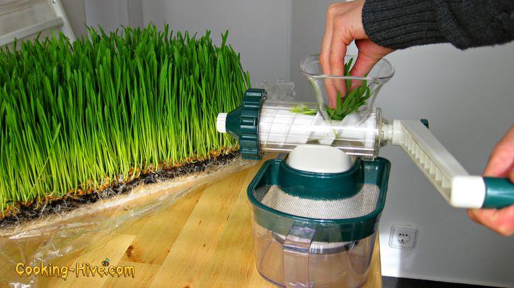 Weizengras Weizengrassaft- Wheatgrass