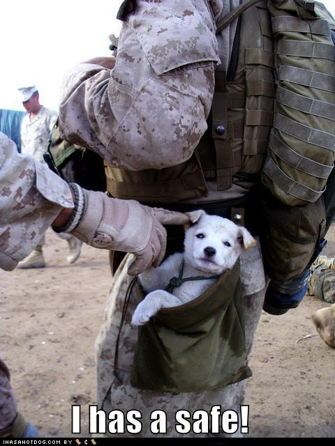 puppy: Friends, Heart, Soldiers, Dogs, Little Puppies, Marines, Small Puppies, Military, Animal