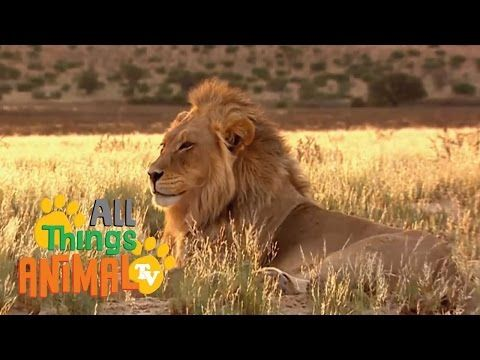 animals alphabet rhymes video song for wild animal alphabetical order list kids zoo abc.wmv - YouTube