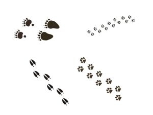 Animal Tracks Wall Decals - Wall Stickers - Wall Murals Canada