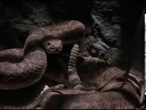 Hadí stisk (CELÝ FILM) horor USA, český dabing, 2001 - YouTube